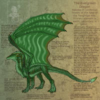 The Evergreen Dragon ref by Da-Lizzard