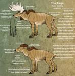 Tarja species ref