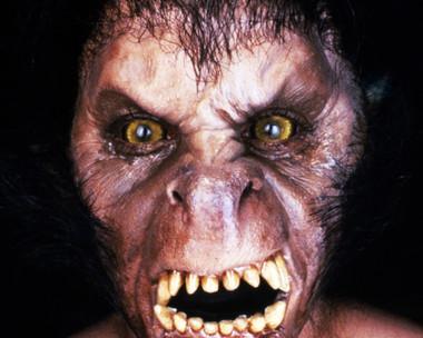 An American Werewolf In London David Naughton by bradyrichie