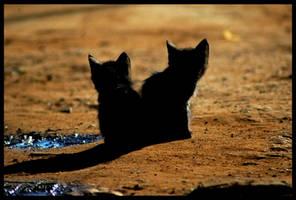 Cats by KaelBard