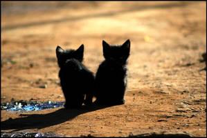 Cats 2 by KaelBard