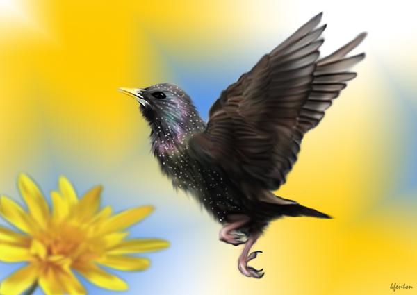 Starling by crazylunagirl