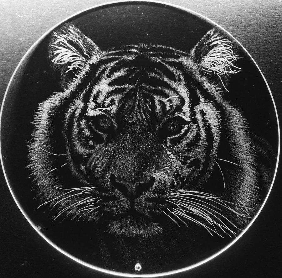 Tiger by Glassfangler