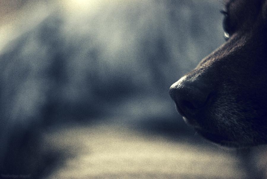 Odor by ValeriyaSegal