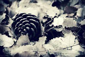 Pinopsida Mors by ValeriyaSegal