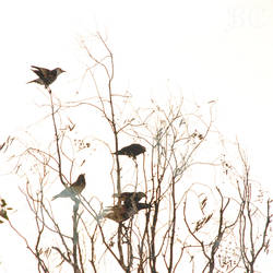 Wooden Ravens by ValeriyaSegal