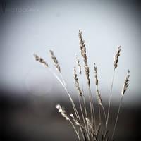 Deserts' Twilight by ValeriyaSegal