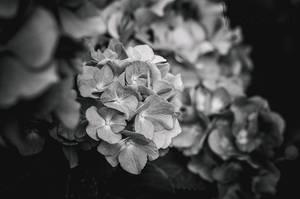 Elegy by ValeriyaSegal