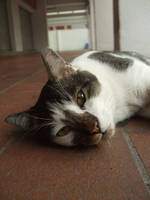Meow? by iwahoshi