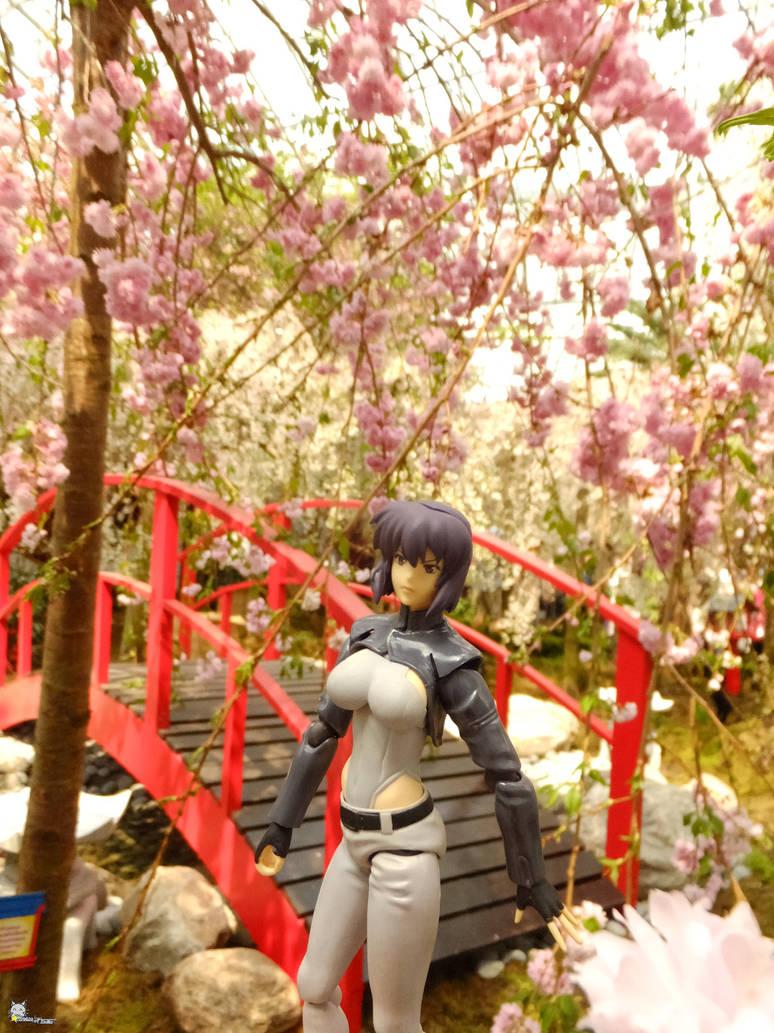 Hanami duty by iwahoshi