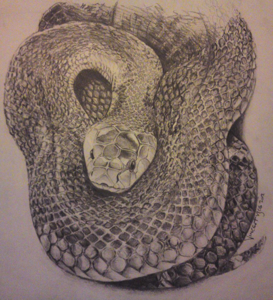 Black Mamba in pencil by VisualSymphonyStudio on DeviantArt