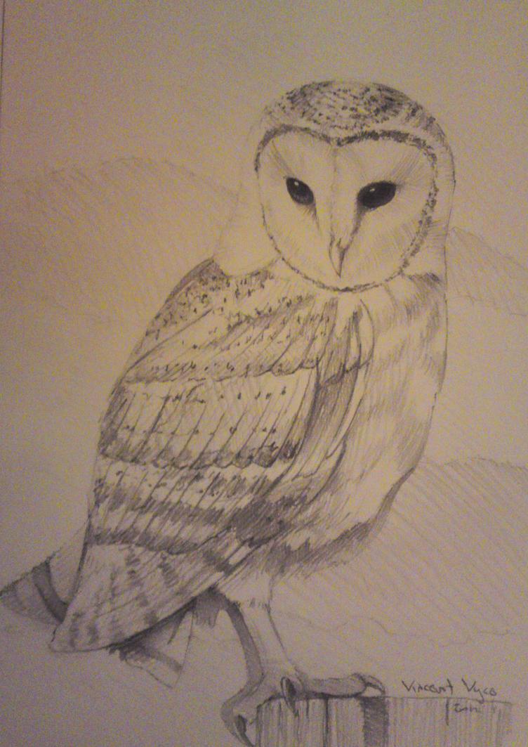 Barn Owl in pencil by VisualSymphonyStudio on DeviantArt