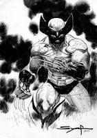 Wolverine in the prairie by ardian-syaf