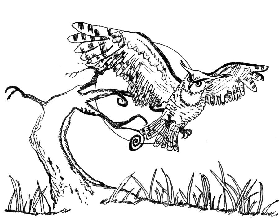 Flying owl pencil drawings - photo#22