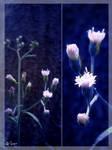 flora 02 by Saswat777