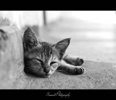 Sleeping Beauty by Saswat777