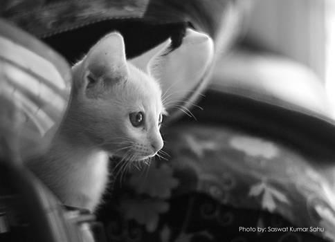 That feline gaze