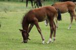 Foal Stock 8