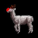Why being a Llama...