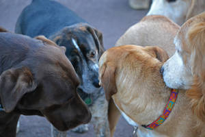 Canine Friends by mtsofan