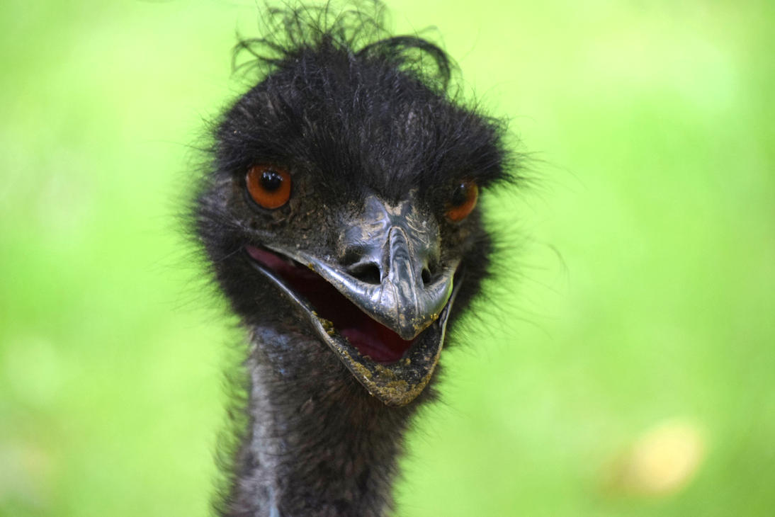 Portrait of an Emu by mtsofan