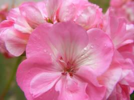 Flower n raindrops by Ann-Lia