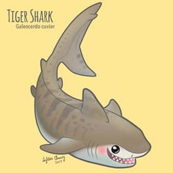 Tiger Shark - Galeocerdo cuvier
