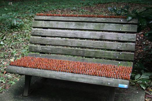 acorn33