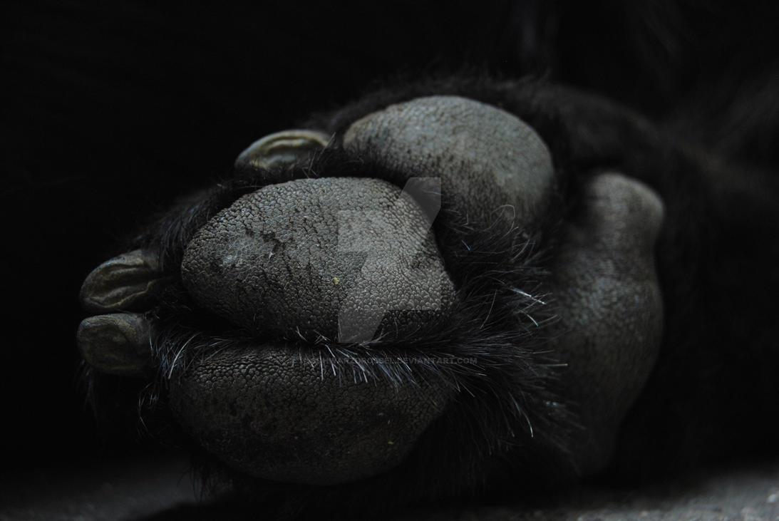 Dog paw by schwarzdrossel