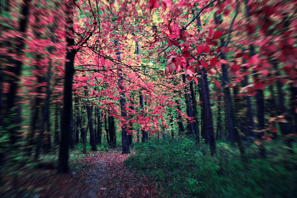 lovely autumn by passionNdesire