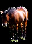 Precut horse