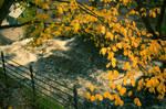 Fall in Oslo #1
