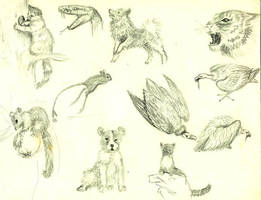 Animals by Angelcry81