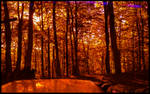 Forest in Red Lens