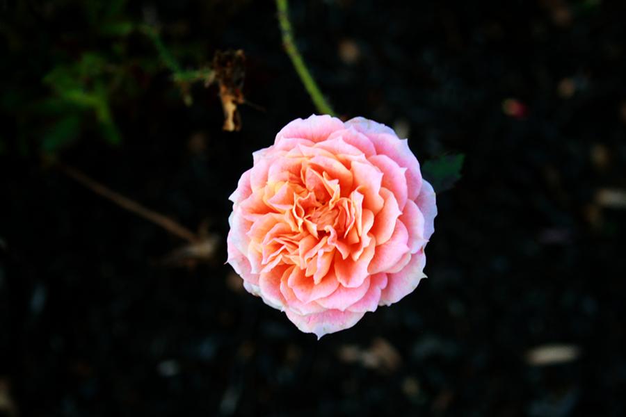 Surprise Flower by likwidoxigen