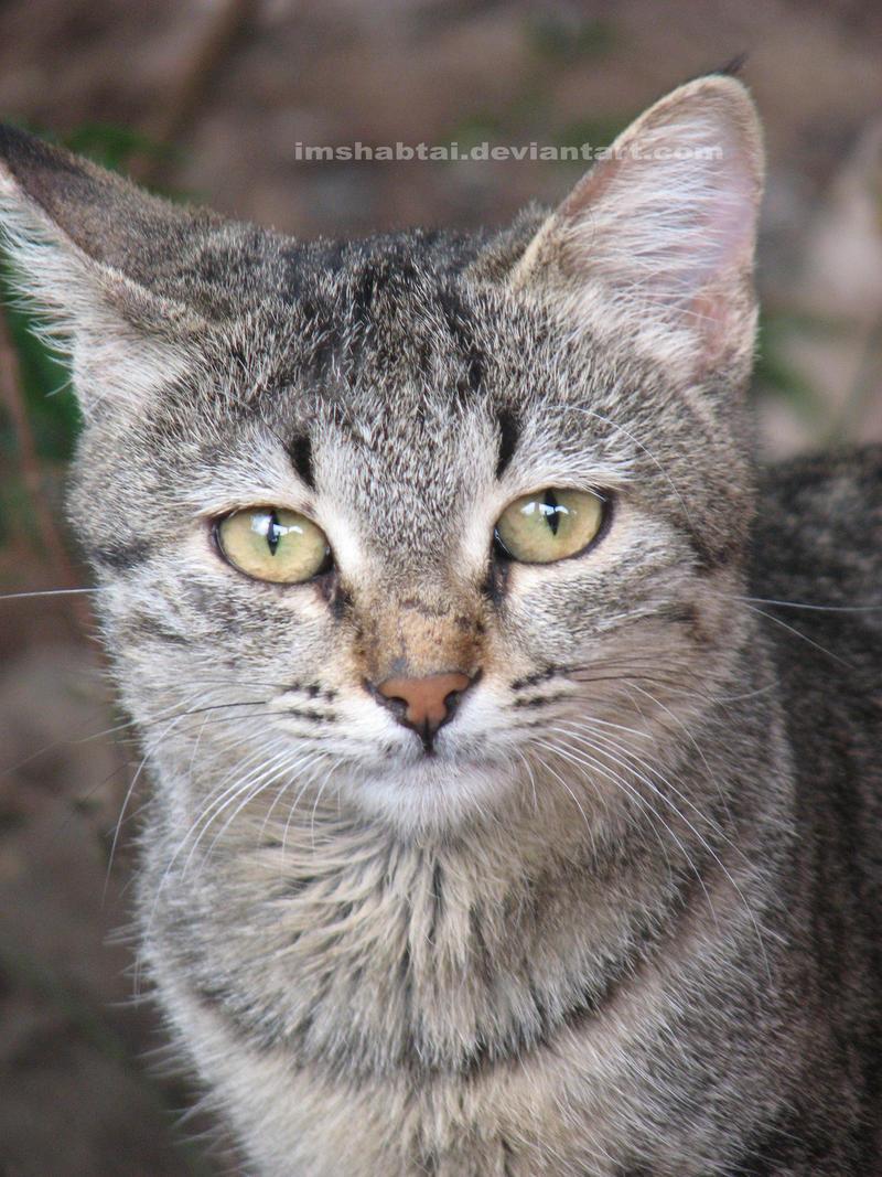 a CAT by ImShabtai