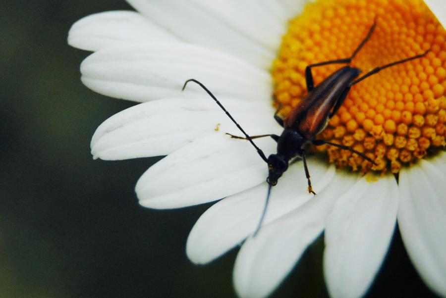 bug 3 by MaktubFrog