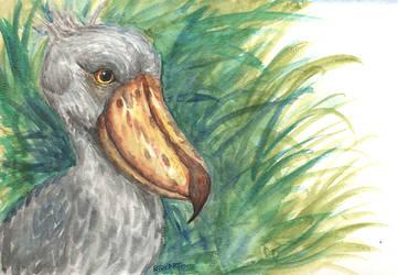 Dunno bird by bdkrt