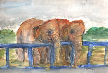 elephants by bdkrt