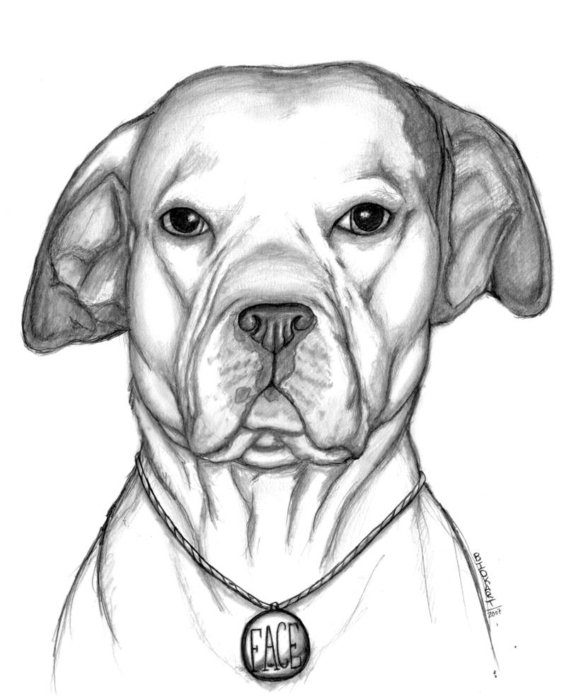 a pitbull name FACE by bdkrt on DeviantArt