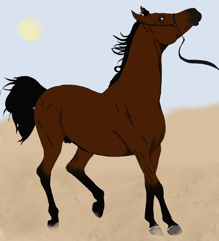RHS Abu Bakr by horsegirl121