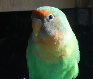 kimoyuki's Profile Picture