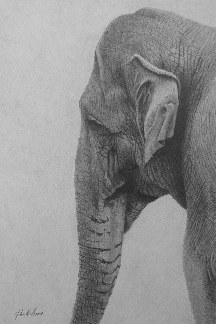 Asian Elephant by bookman73 on DeviantArt