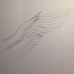 Wings/Feathers! (Practice)