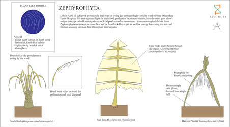 Zephyrophyta
