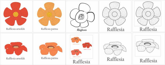 T-Shirt Apparel Design - Rafflesia