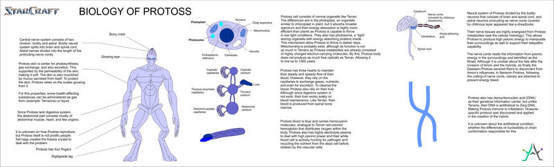 Starcraft - Protoss Biology