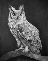Great Horned Owl by Camille-Marie