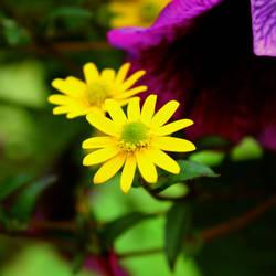 yellow vs purple by beetfreeq