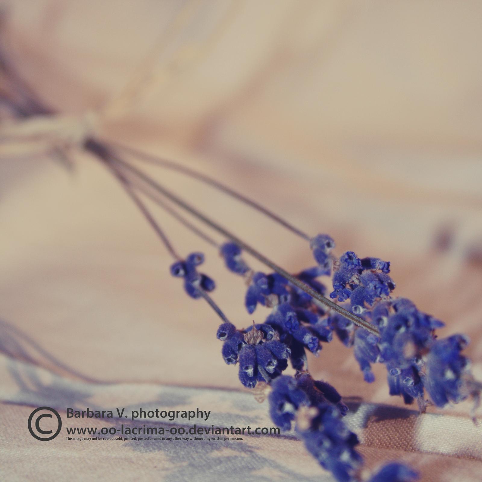 0254 by Oo-lacrima-oO